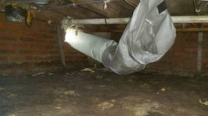 Water Damage and Mold In Building Crawlspace